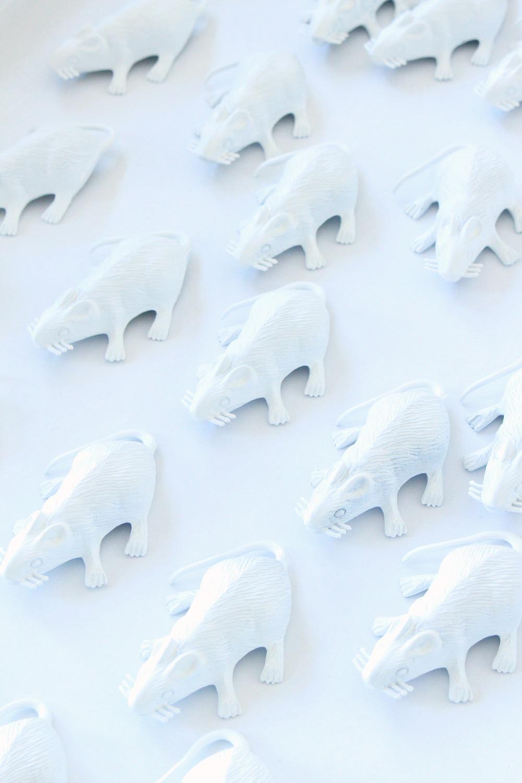 White Plastic Rats