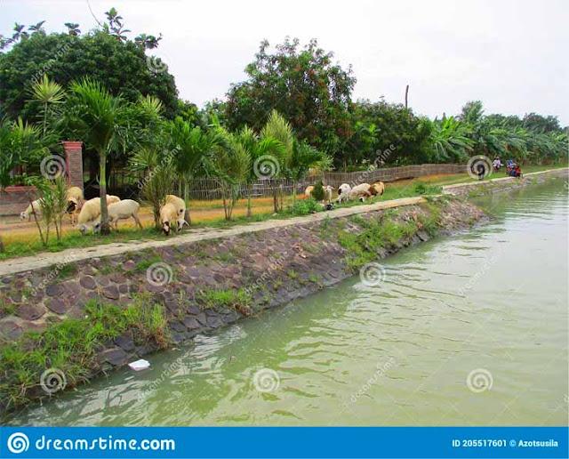 dam-agricultural-industry-mekarjaya-area-compreng-district-subang-regency-west-java-indonesia-dam-205517601