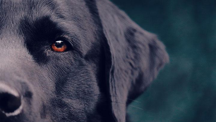 dog impulse control
