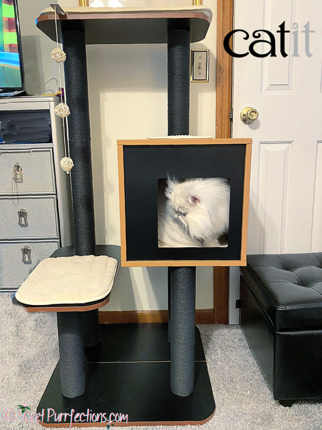silver shaded persian cat, Brulee, inside cubed den on cat tree