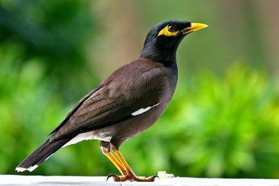 Pictures of Bird - photo#18