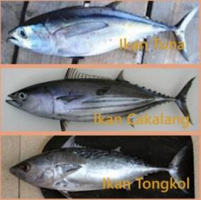 Tongkol, Ikan Cakalang, dаn Ikan Tuna