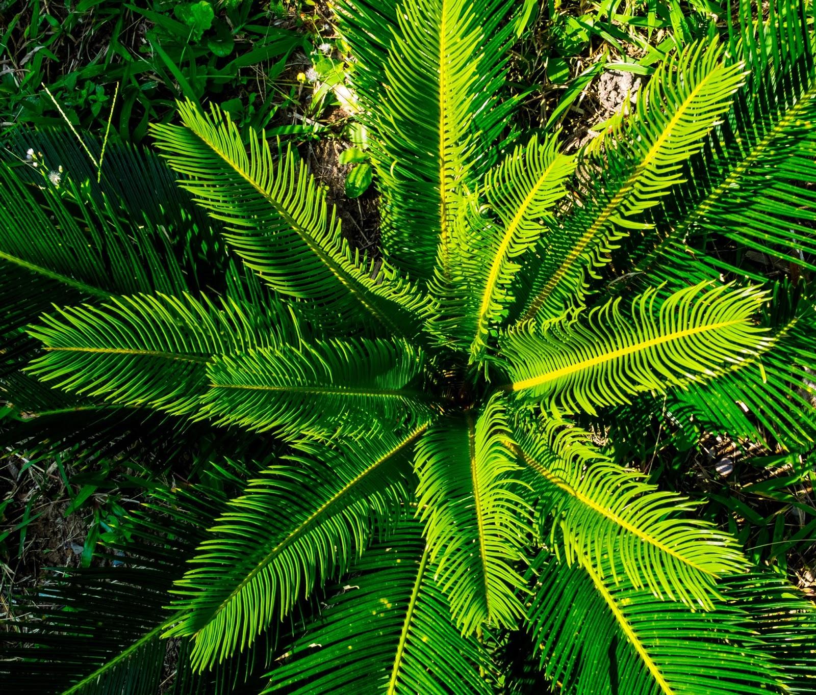 Sun Trust Palm Beach Gardens