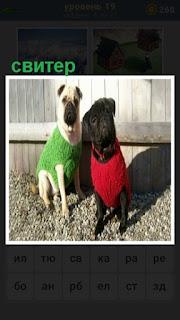 две собаки одеты в разные свитера на улице сидят