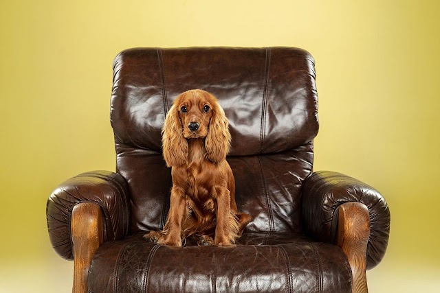 Ο σκύλος σας είναι «κυριαρχικός»; Πώς να τον χειριστείτε