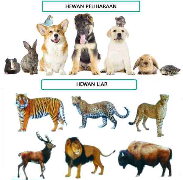Hewan Peliharaan dan Hewan Liar