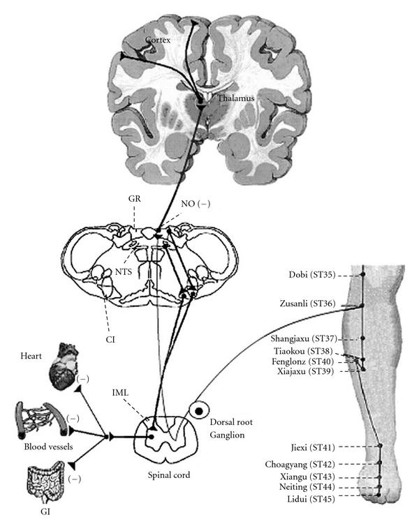 Diagnose Zks