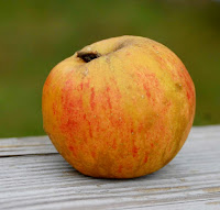 Small russet-and-orange apple
