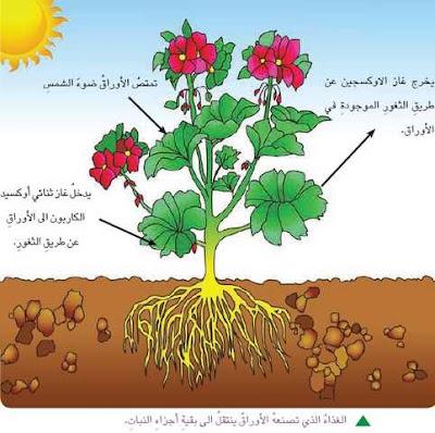 غذاء-النباتات