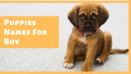 Puppies Names For Boy