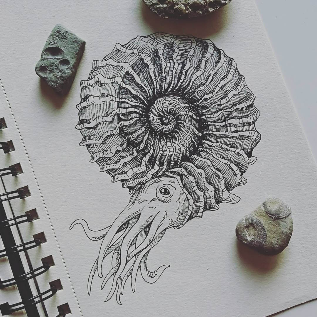 08-Ammonites-Weronika-Kolinska-Black-and-White-Animal-Ink-Drawings-www-designstack-co
