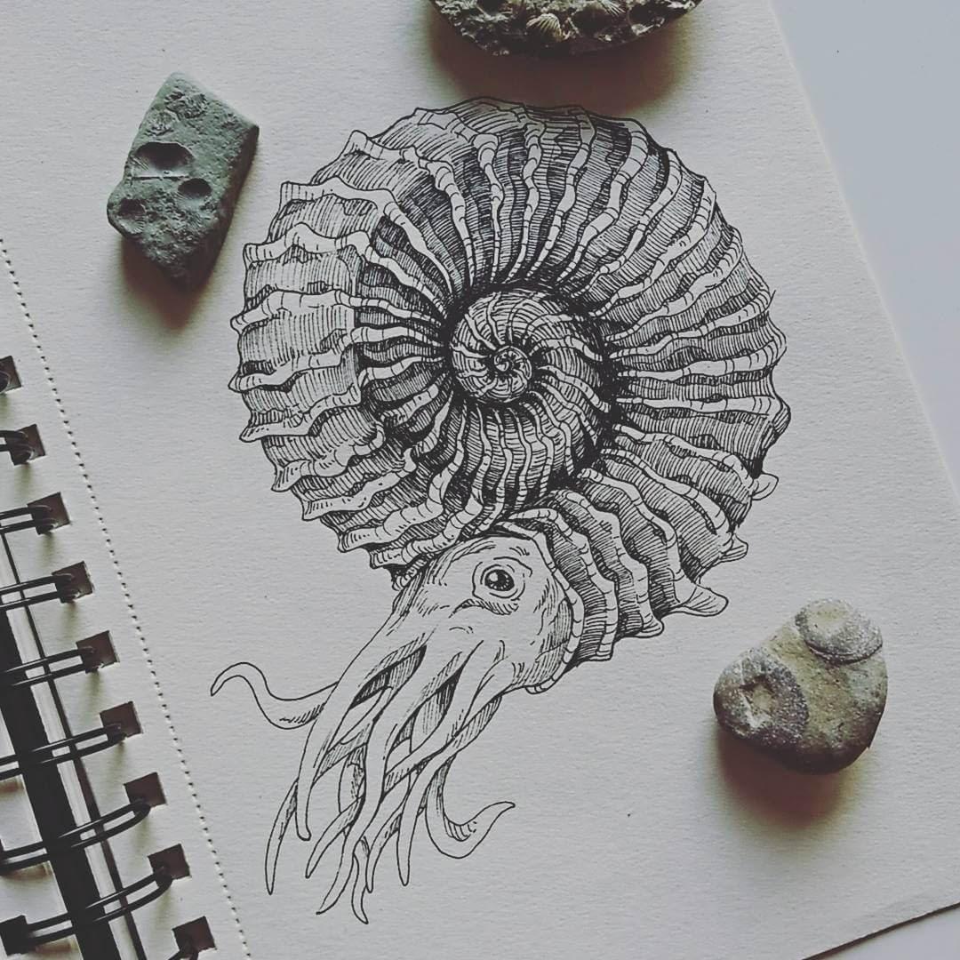 08-Ammonites-Weronika-Kolinska-Black-and-White-Animal-Ink-Drawings-www-designstack-co