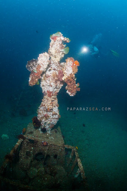 Dive Philippines, Scuba Diving Philippines, Underwater Photography Philippines, PaparazSea, Jun V Lao, Learn Scuba Dviing iin the Philippines