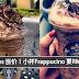 Starbucks 涨价!小杯Frappucino 要RM17.50了!! 网民:喝不起Starbucks 了!你还会喝吗?