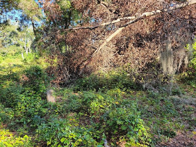A hidden grave stone at The Pinehurst and San Sebastian cemeteries in St. Augustine, Florida