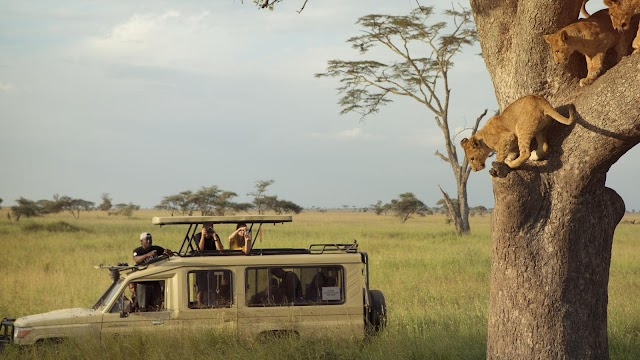 African Safari Tours and Safari Holidays