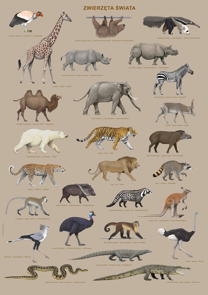 Vida Selvagem da África