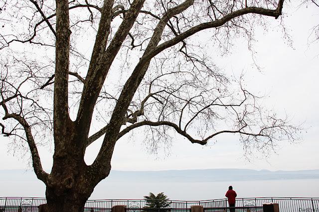 Arbre, lac Léman