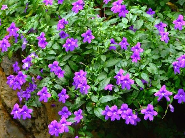 10 plantas para jardines en sombra guia de jardin - Plantas de sol y sombra ...