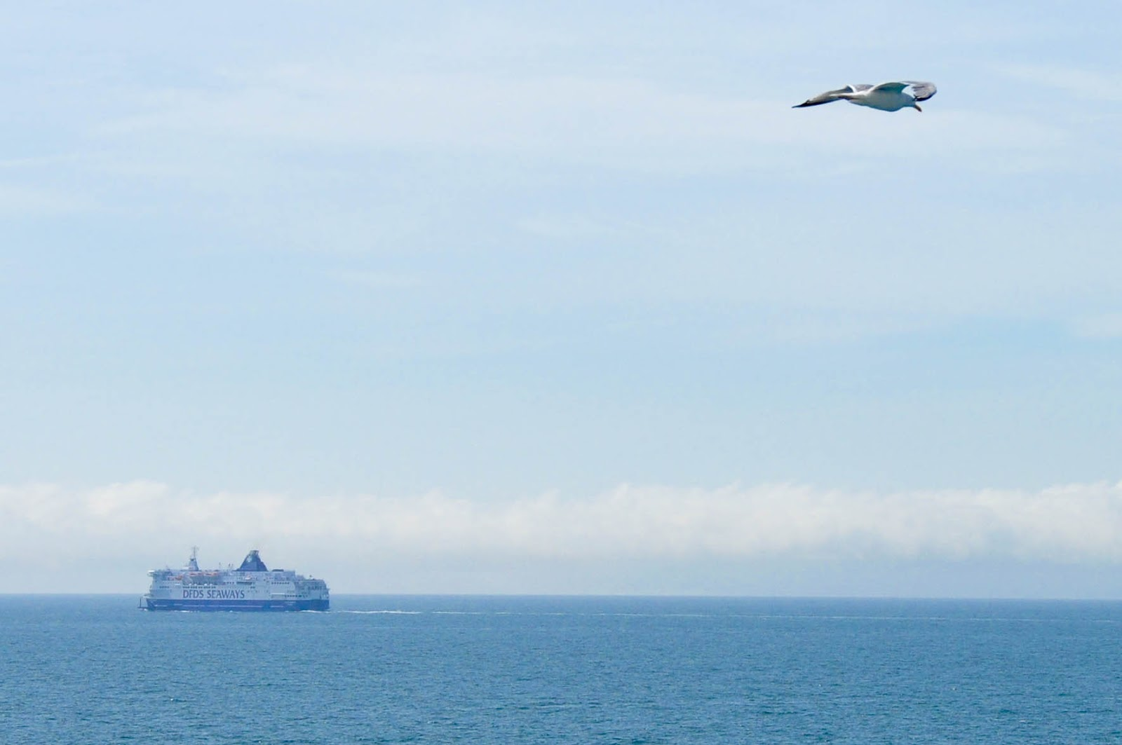 A seagull in flight and a DFDS ferry, the English Channel back from France
