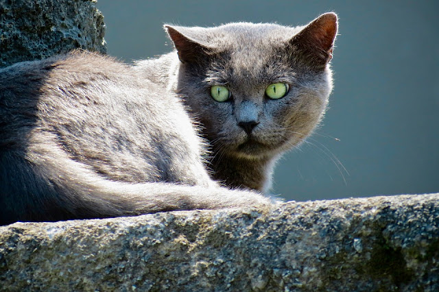 Are Cats Nocturnal? | Hill's Pet