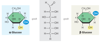 Momoner glukosa, alpha (α) glukosa, beta (β) glukosa, α glukosa adalah, β glukosa adalah