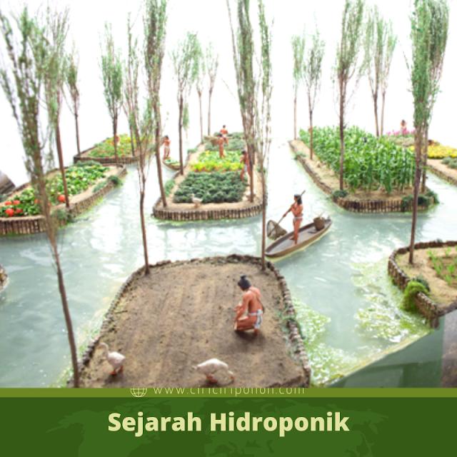 Ciri Ciri Pohon Sejarah Hidroponik