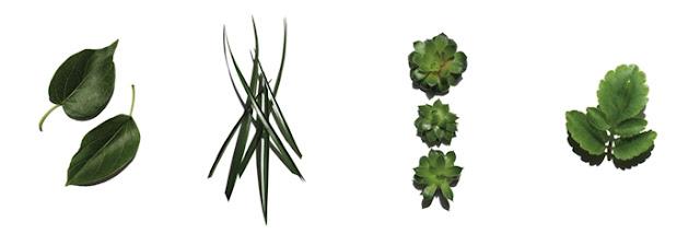 Plantas_complejo_super_hydratant_clarins_men
