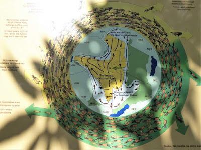 mappa migrazione serengeti