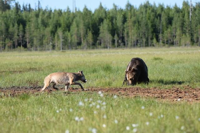 Erikoiset majoitukset Suomessa - karhunkatselukoppi