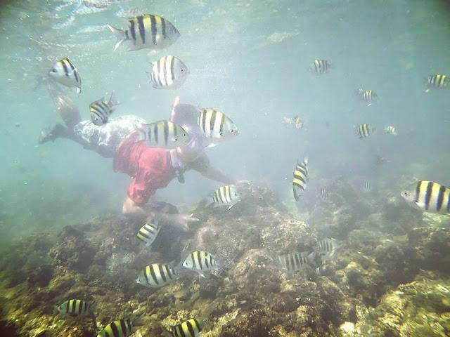 pantai sadranan snorkeling