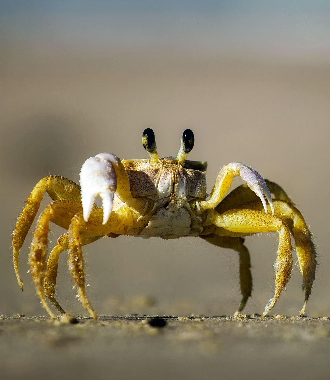 Picture of a crab.