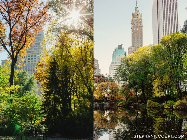 fall foliage in Central Park