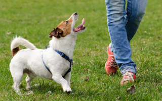 Ask about special follow-up for your dog or puppy