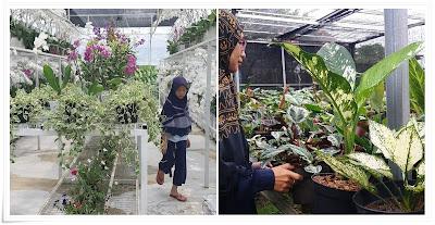 bisnis online tanaman hias