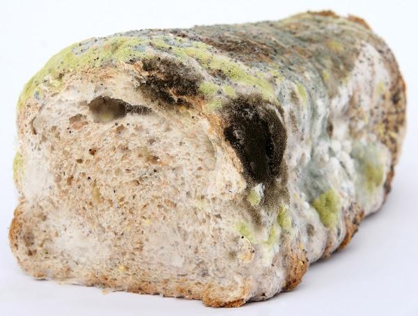 roti membusuk