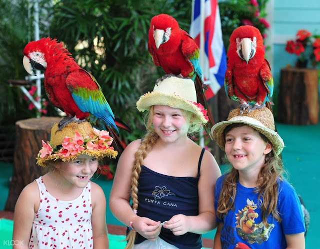 kids with parrots in phuket bird park