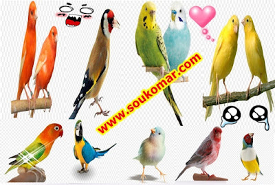 الصدمة و الفزع عند اللطيور