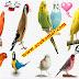 كيفية التعامل مع الطيور التي تصاب بالصدمة