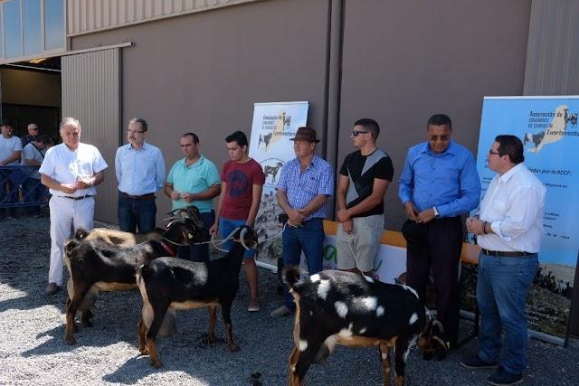 Fuerteventura.- Feaga 2019 : Cabra de la ganadería de Antonio Cabrera gana concurso morfológico de la Asociación de Criadores de Cabra Majorera