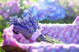 lavender-fresh-flowers-herbal