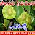 රෝග රැසකට සුව ගෙනෙන ගම්මාලු (Gammalu [Pterocarpus Marsupium])