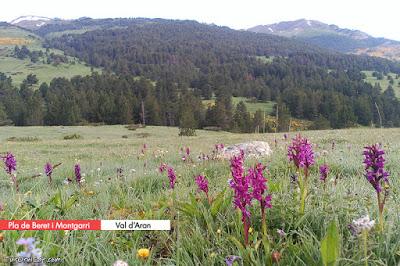 Pla de Beret (Val d'Aran)
