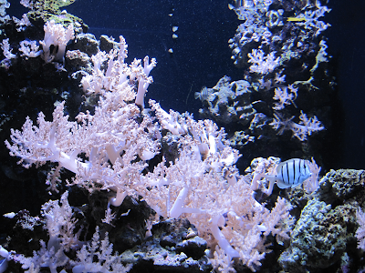 Some corals and fish