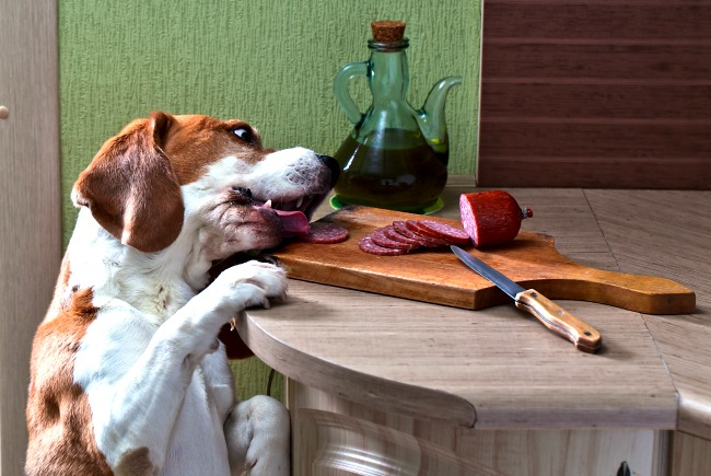 Dlaczego pies nie je?