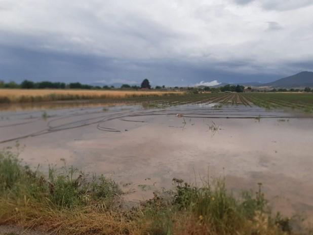 Μεγάλες ζημιές από το χαλάζι σε 3.500 στρέμματα καλλιεργειών στο Κιλελέρ