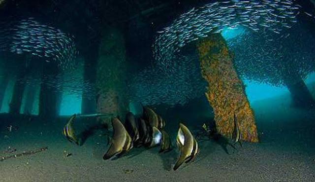 Indonesia adalah salah satu tujuan scuba diving terbaik di dunia 20 SCUBA DIVING TERBAIK DI INDONESIA