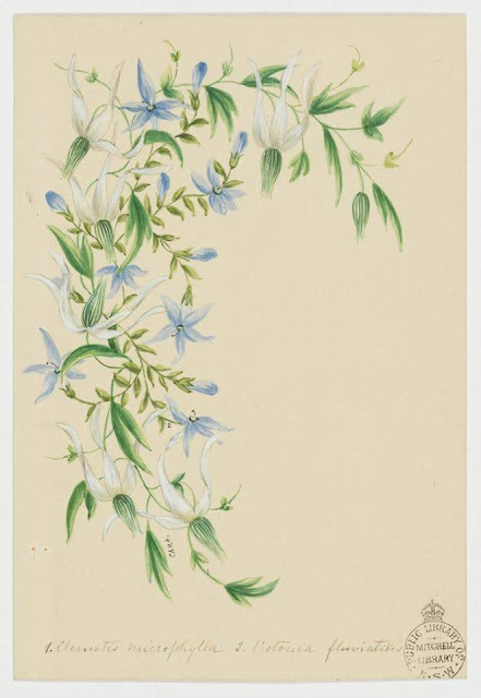 Christmas Card design depicting native Australian white flowers.