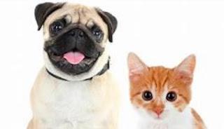 Міфи та факти про Pet страхування здоров'я