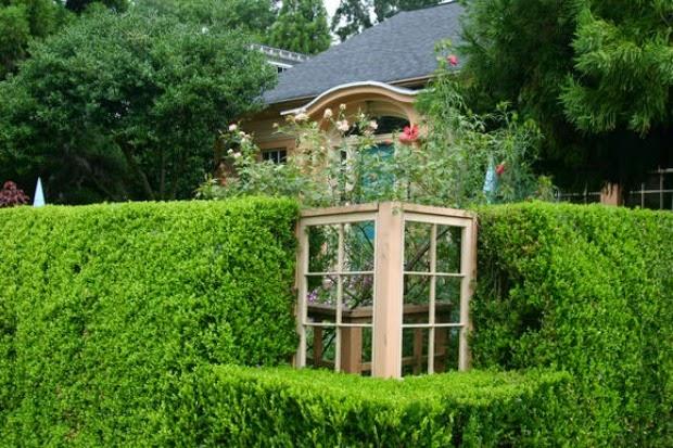 Las 7 con feras m s utilizadas como setos guia de jardin - Setos para vallas ...